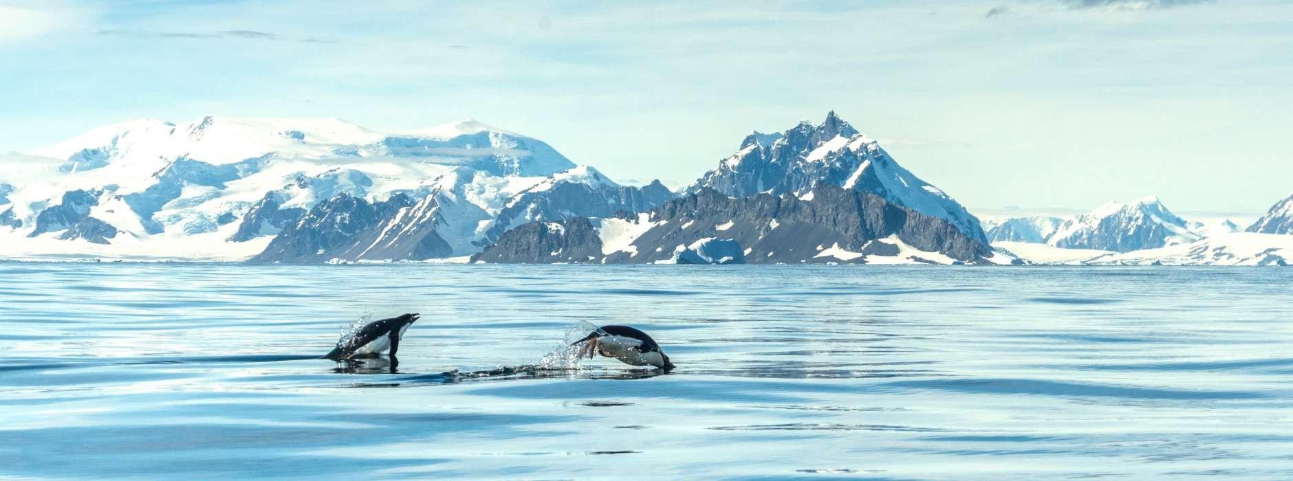 Antarctica Cruises 2018  Swoop Antarctica