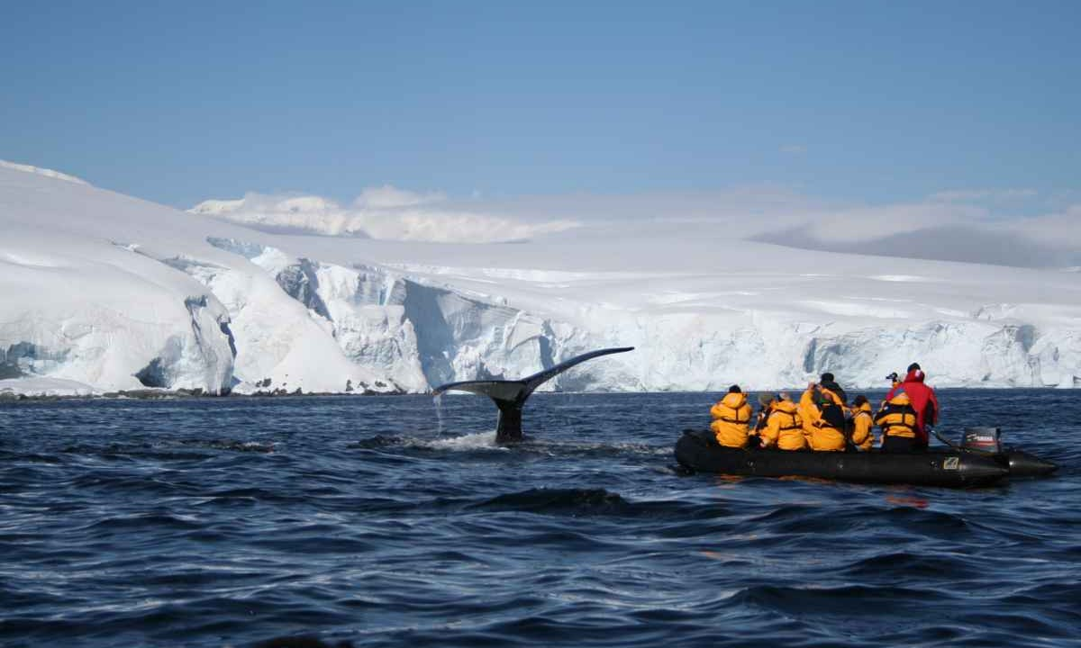 Antarctic Cruises  Adventure Tours From Swoop Antarctica
