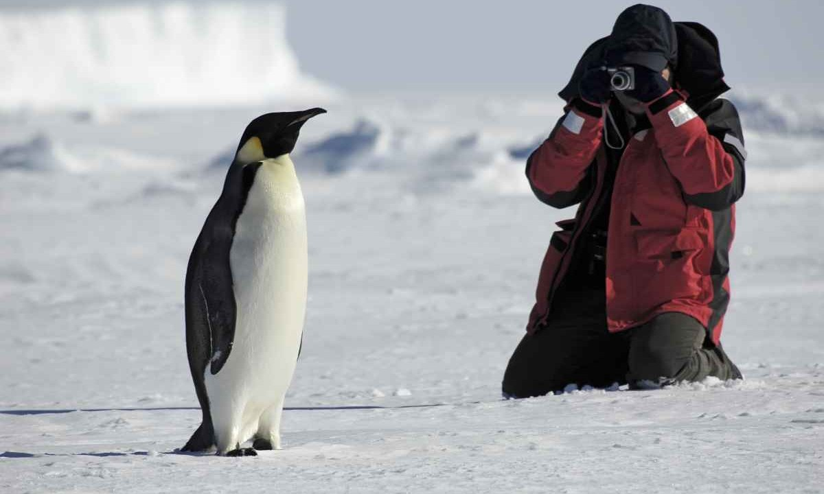 Antarctic Cruises Adventure Tours From Swoop Antarctica - 12 things to see and do in antarctica