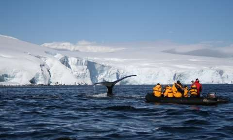 Antarctic Costs Explained How Much Does It Cost To Travel To - 12 things to see and do in antarctica