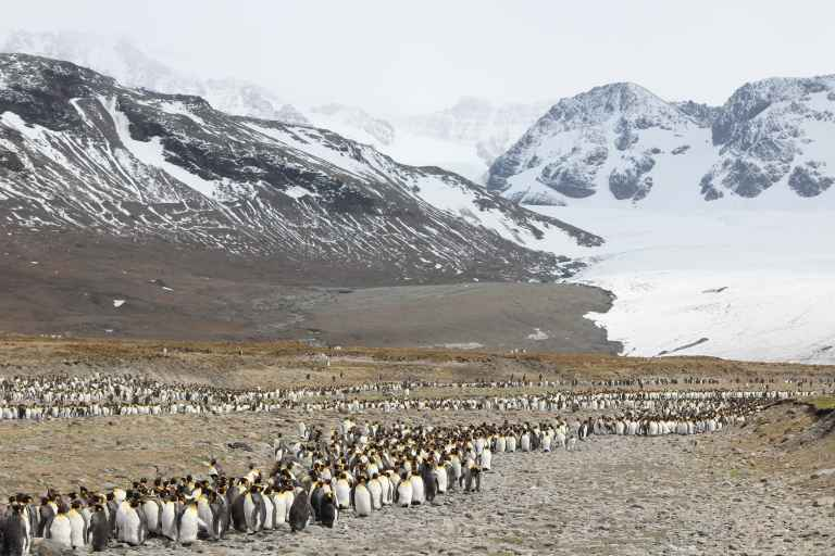 CUS_3_Charles-Leslie-Cook_PRIV_penguins-mountains-e